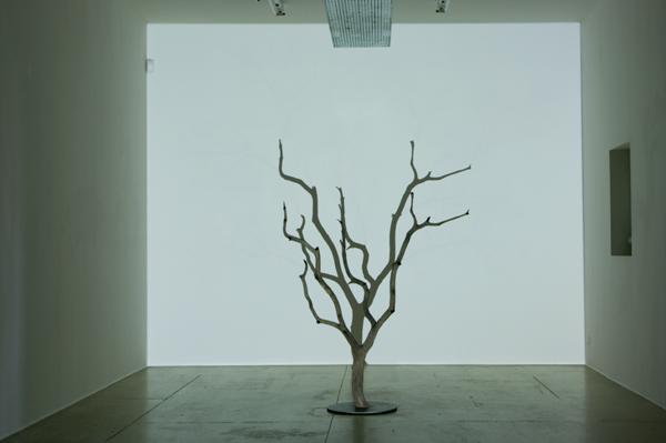 Sans titre (L'arbre et son ombre)