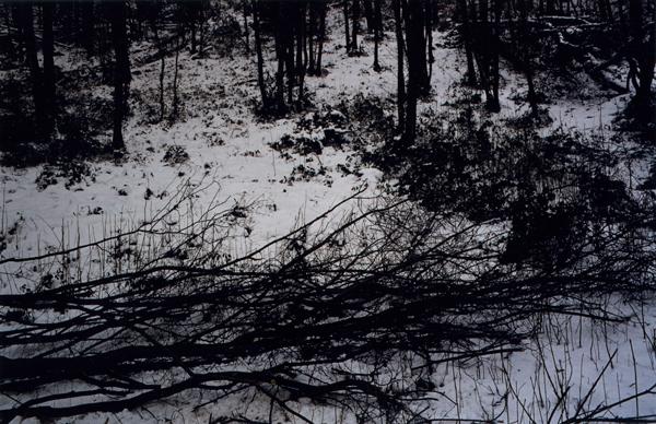 Lichtung, 2007