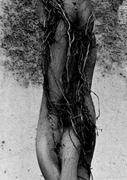 Portrait de l'esprit de la forêt