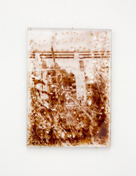 Série de photographies tirées sur plaques de Plexiglas à travers une solution</br>argentique alternative (Procédé Van Dyck)